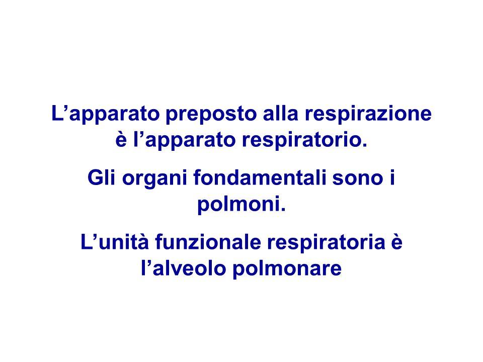 L'apparato preposto alla respirazione è l'apparato respiratorio.