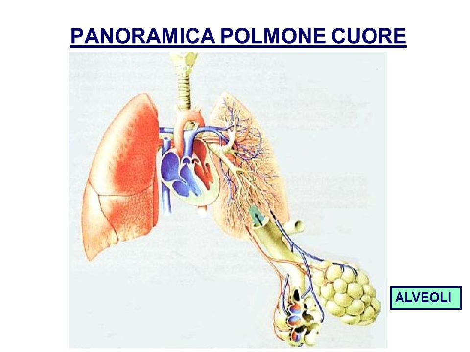 PANORAMICA POLMONE CUORE