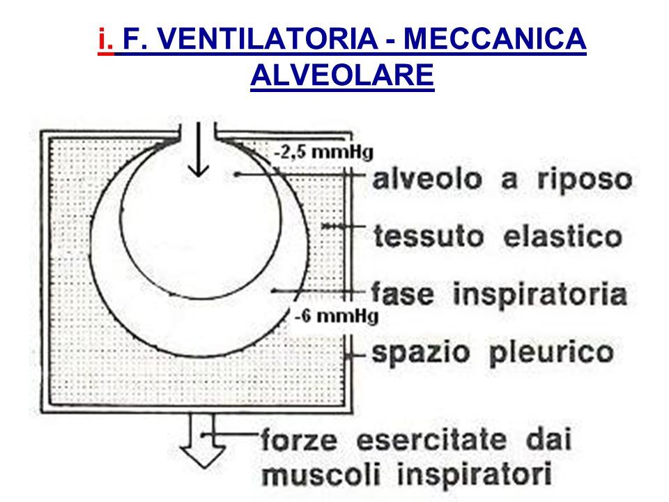 i. F. VENTILATORIA - MECCANICA ALVEOLARE