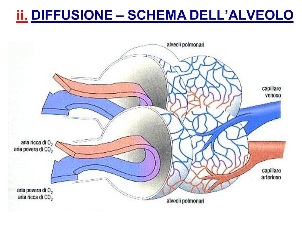 ii. DIFFUSIONE – SCHEMA DELL'ALVEOLO