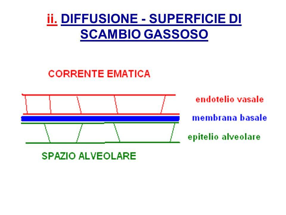 ii. DIFFUSIONE - SUPERFICIE DI SCAMBIO GASSOSO