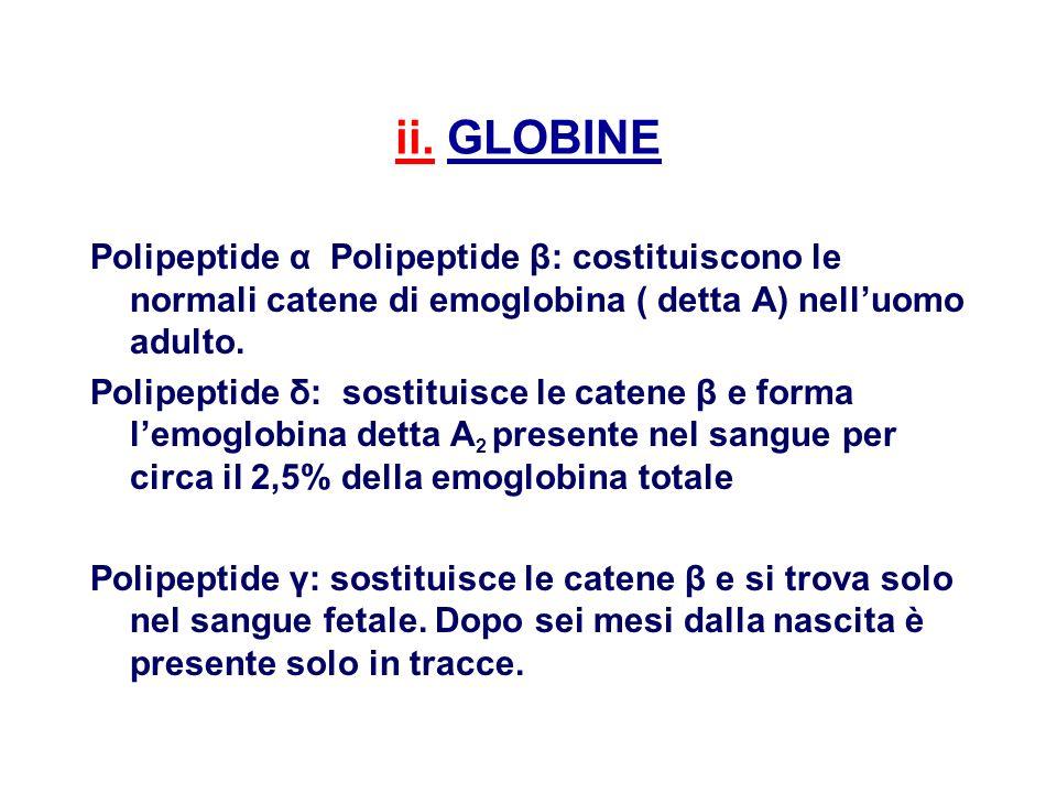 ii. GLOBINE Polipeptide α Polipeptide β: costituiscono le normali catene di emoglobina ( detta A) nell'uomo adulto.
