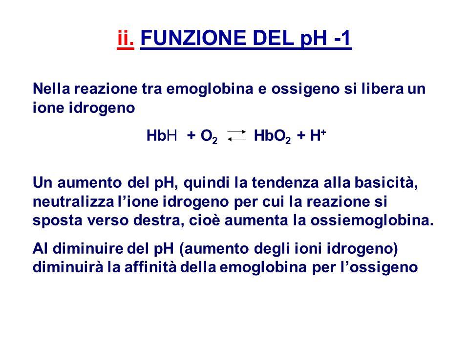 ii. FUNZIONE DEL pH -1 Nella reazione tra emoglobina e ossigeno si libera un ione idrogeno. HbH + O2 HbO2 + H+
