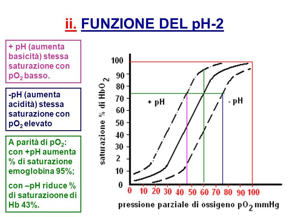 ii. FUNZIONE DEL pH-2 + pH (aumenta basicità) stessa saturazione con pO2 basso. -pH (aumenta acidità) stessa saturazione con pO2 elevato.