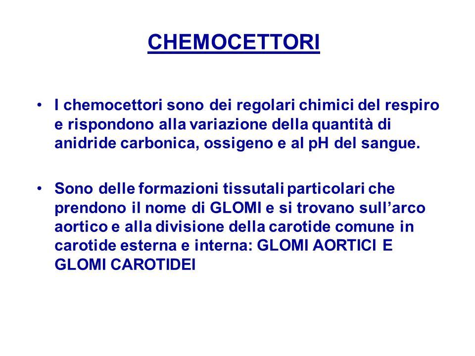 CHEMOCETTORI
