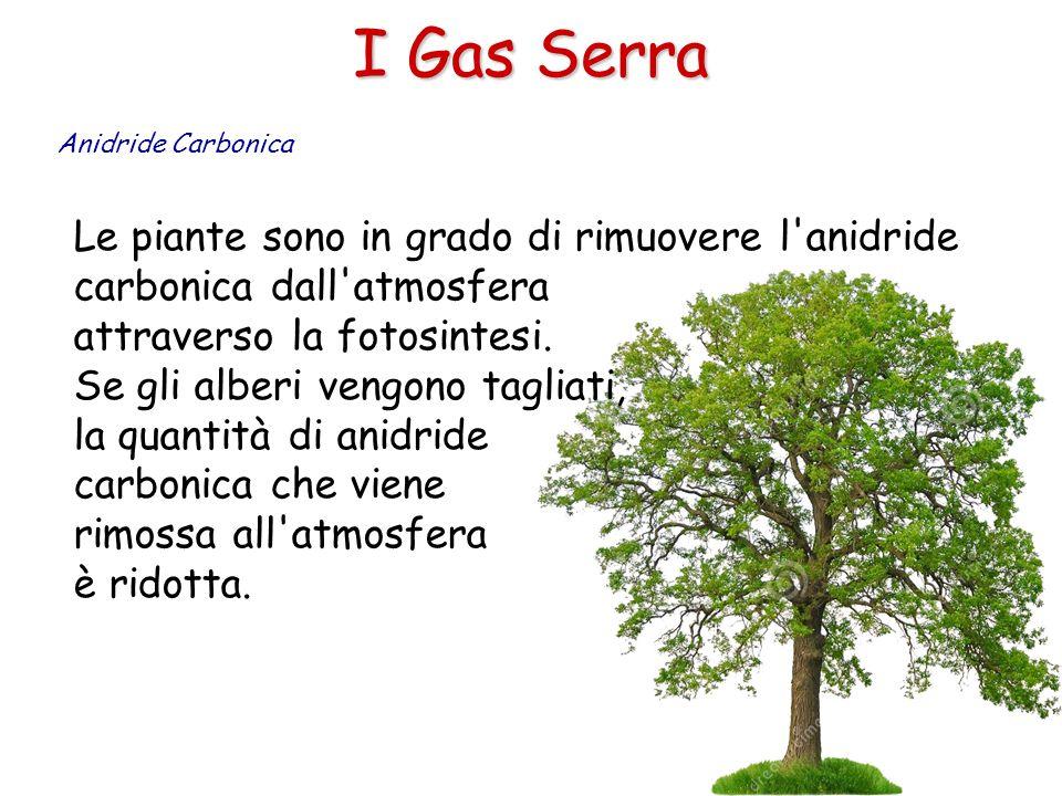 I Gas Serra Anidride Carbonica. Le piante sono in grado di rimuovere l anidride carbonica dall atmosfera attraverso la fotosintesi.