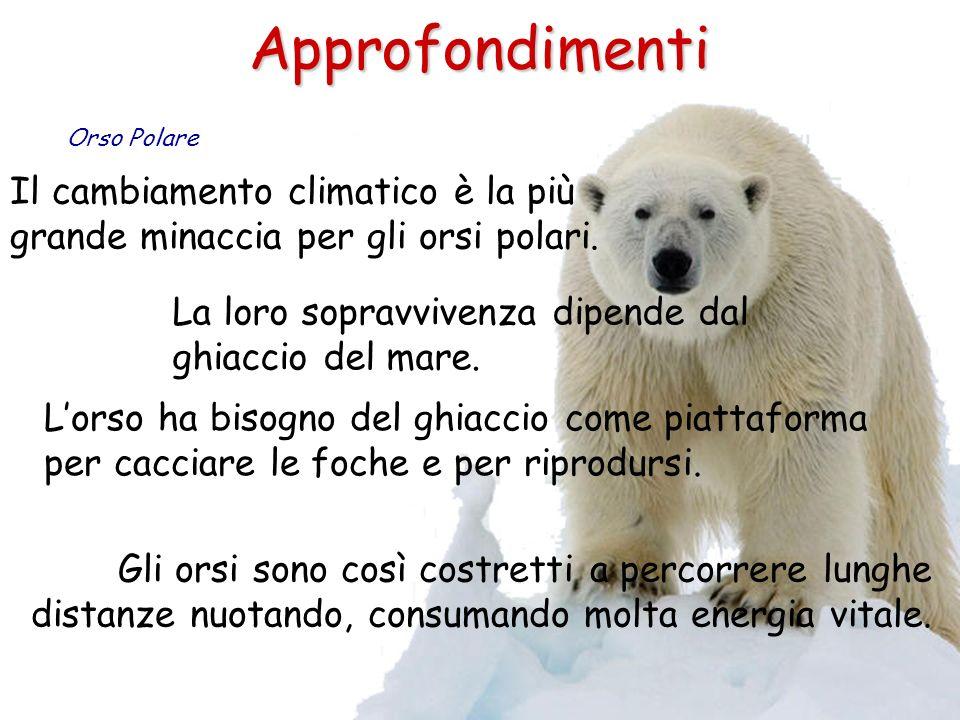 Approfondimenti Orso Polare. Il cambiamento climatico è la più grande minaccia per gli orsi polari.