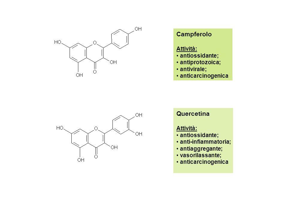 Campferolo Quercetina Attività: antiossidante; antiprotozoica;