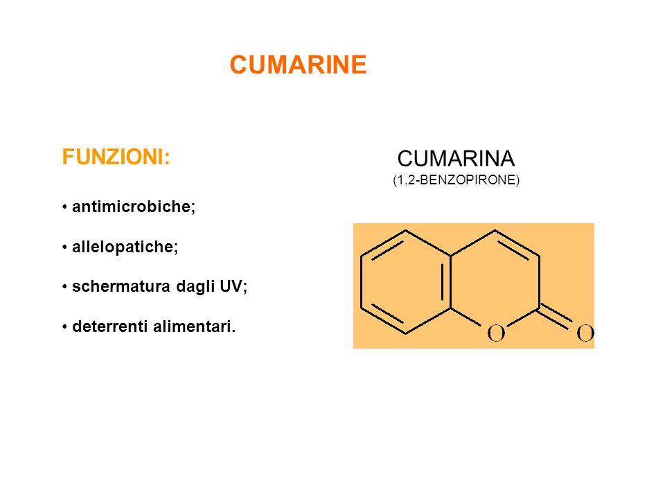 CUMARINE FUNZIONI: CUMARINA antimicrobiche; allelopatiche;