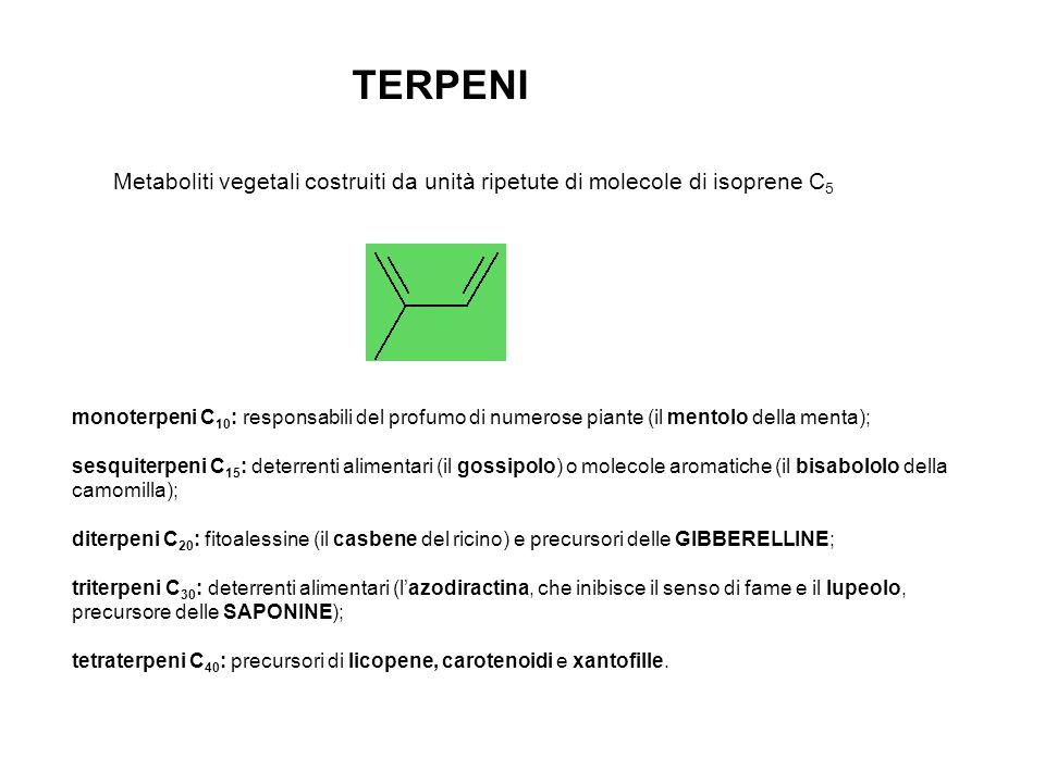 TERPENI Metaboliti vegetali costruiti da unità ripetute di molecole di isoprene C5.