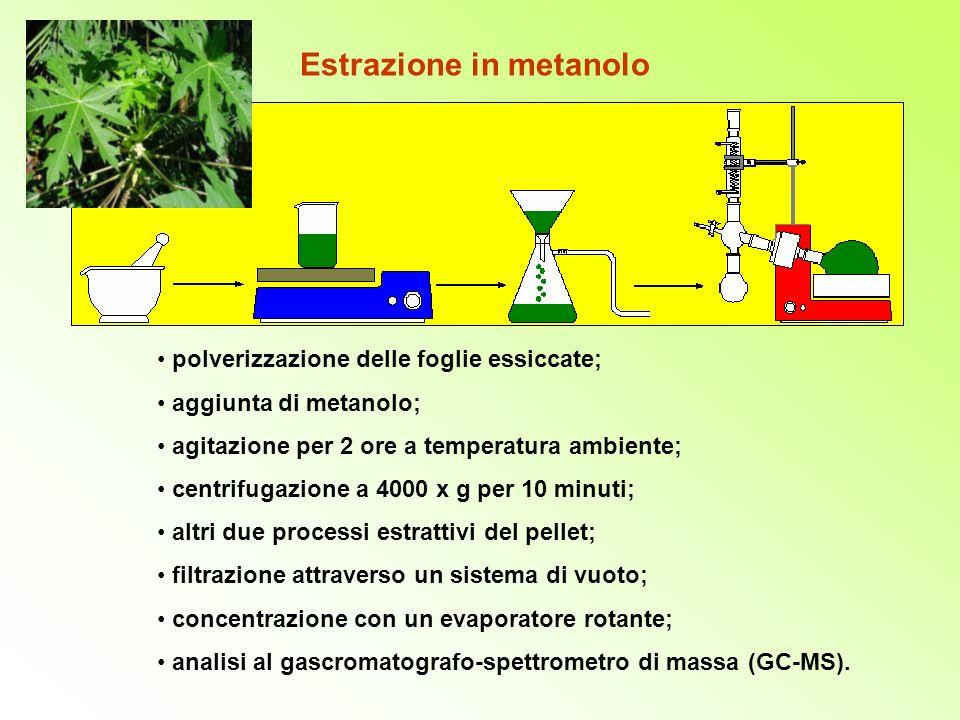 Estrazione in metanolo