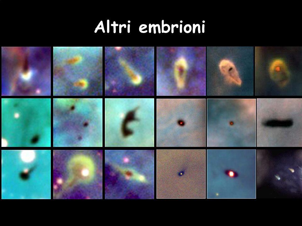 Altri embrioni