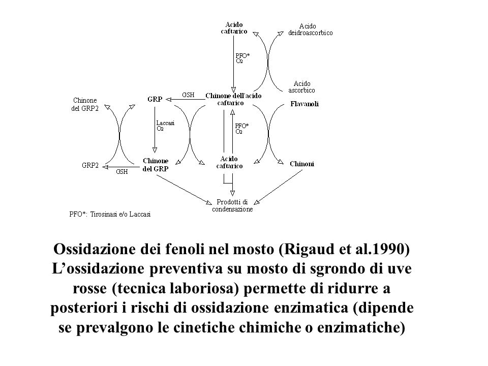 Ossidazione dei fenoli nel mosto (Rigaud et al.1990)