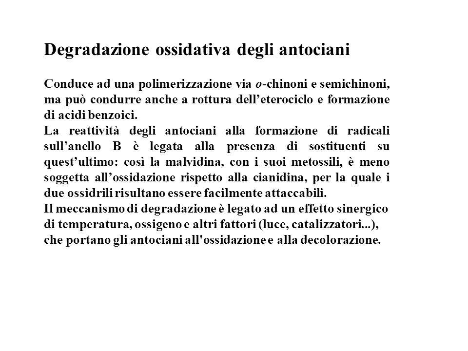 Degradazione ossidativa degli antociani