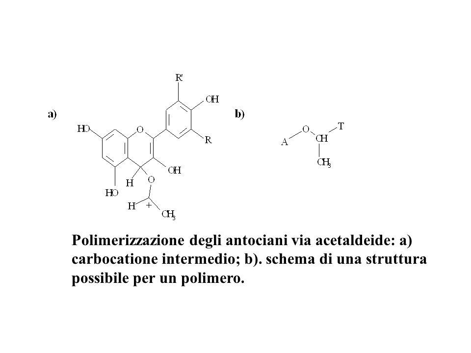 Polimerizzazione degli antociani via acetaldeide: a) carbocatione intermedio; b).