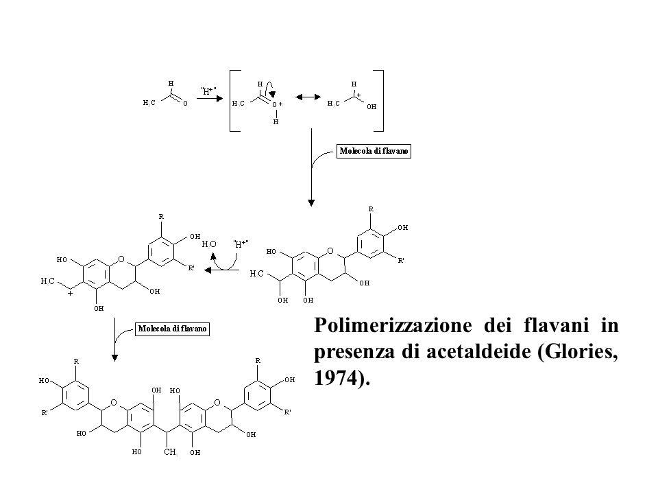 Polimerizzazione dei flavani in presenza di acetaldeide (Glories, 1974).