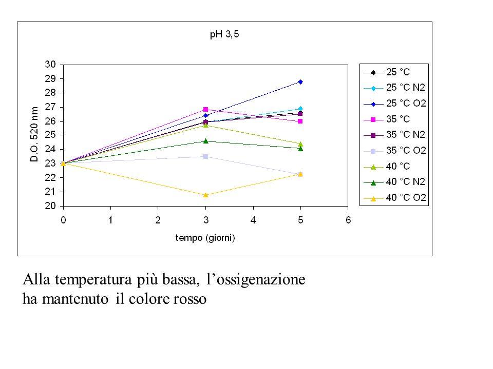 Alla temperatura più bassa, l'ossigenazione ha mantenuto il colore rosso