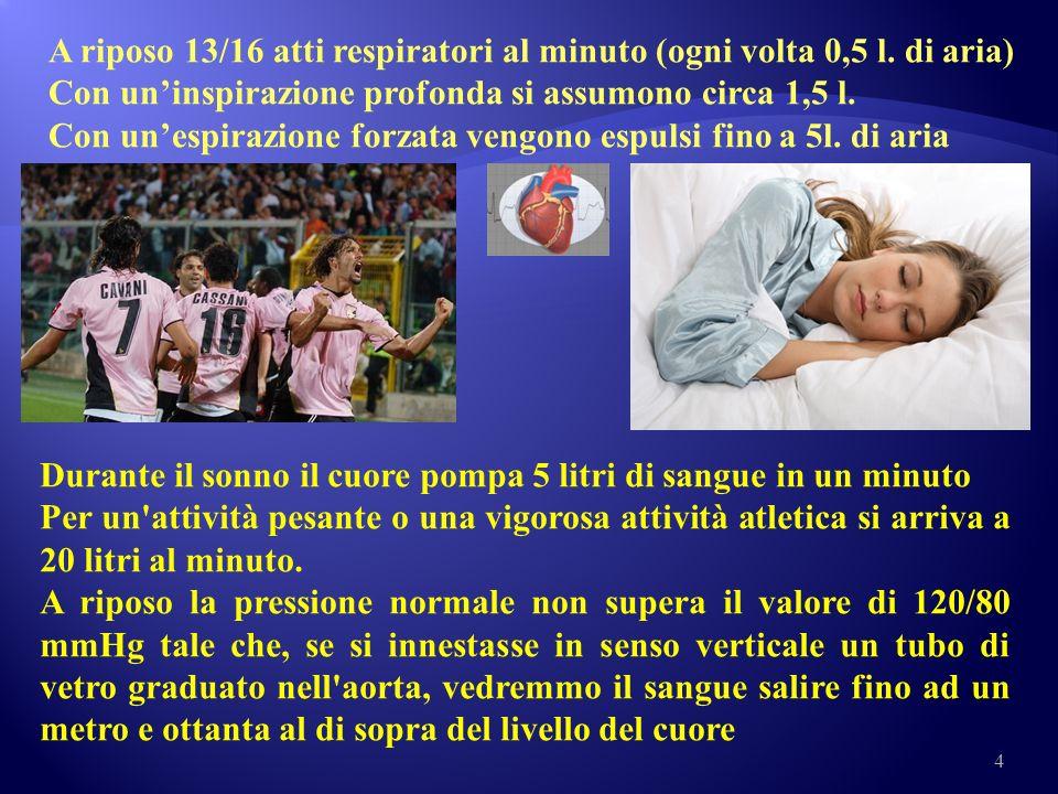 A riposo 13/16 atti respiratori al minuto (ogni volta 0,5 l. di aria)