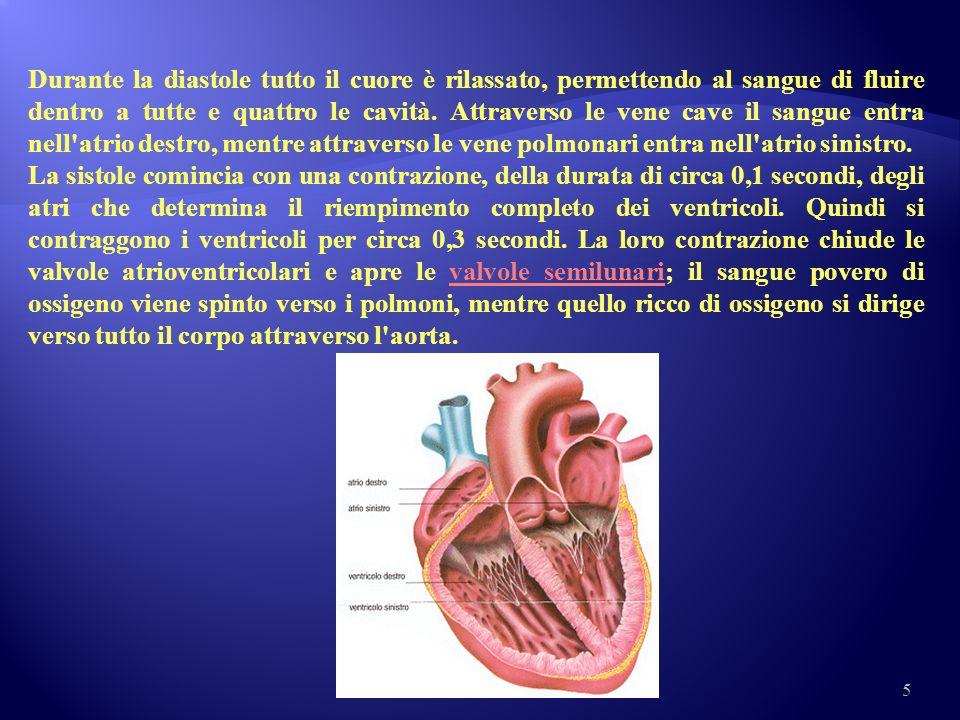 Durante la diastole tutto il cuore è rilassato, permettendo al sangue di fluire dentro a tutte e quattro le cavità. Attraverso le vene cave il sangue entra nell atrio destro, mentre attraverso le vene polmonari entra nell atrio sinistro.