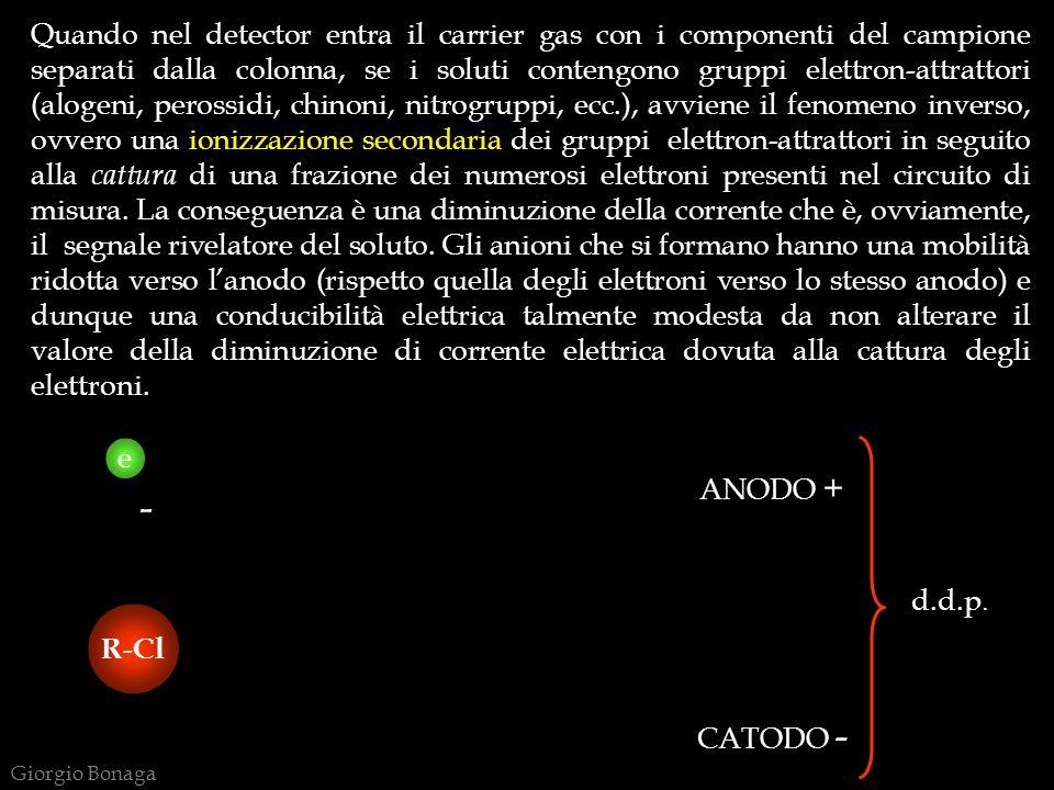 Quando nel detector entra il carrier gas con i componenti del campione separati dalla colonna, se i soluti contengono gruppi elettron-attrattori (alogeni, perossidi, chinoni, nitrogruppi, ecc.), avviene il fenomeno inverso, ovvero una ionizzazione secondaria dei gruppi elettron-attrattori in seguito alla cattura di una frazione dei numerosi elettroni presenti nel circuito di misura. La conseguenza è una diminuzione della corrente che è, ovviamente, il segnale rivelatore del soluto. Gli anioni che si formano hanno una mobilità ridotta verso l'anodo (rispetto quella degli elettroni verso lo stesso anodo) e dunque una conducibilità elettrica talmente modesta da non alterare il valore della diminuzione di corrente elettrica dovuta alla cattura degli elettroni.