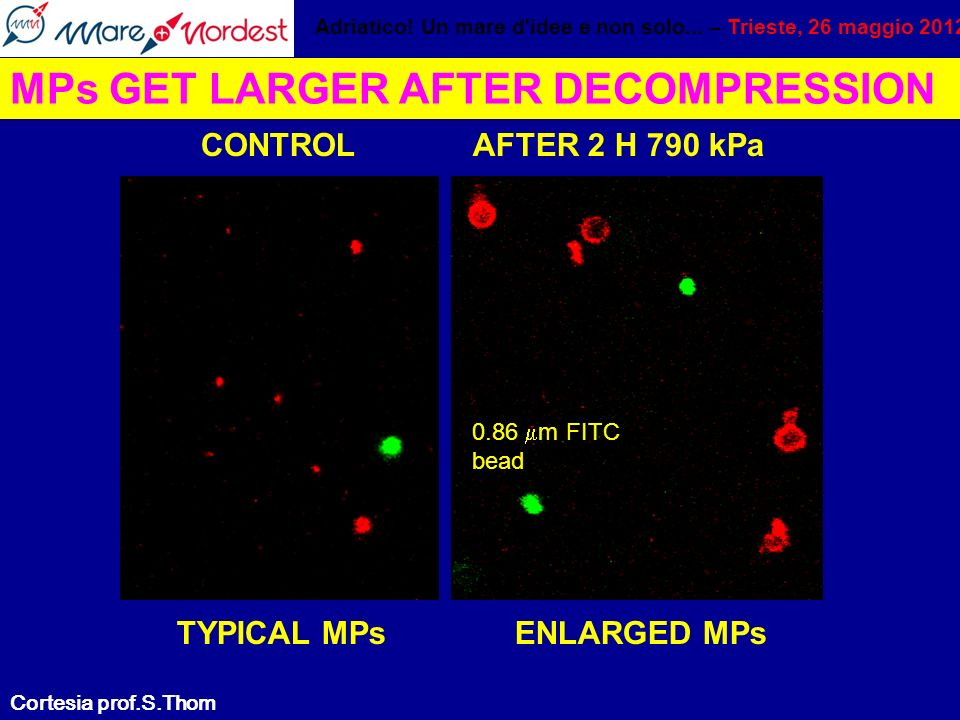 MPs GET LARGER AFTER DECOMPRESSION