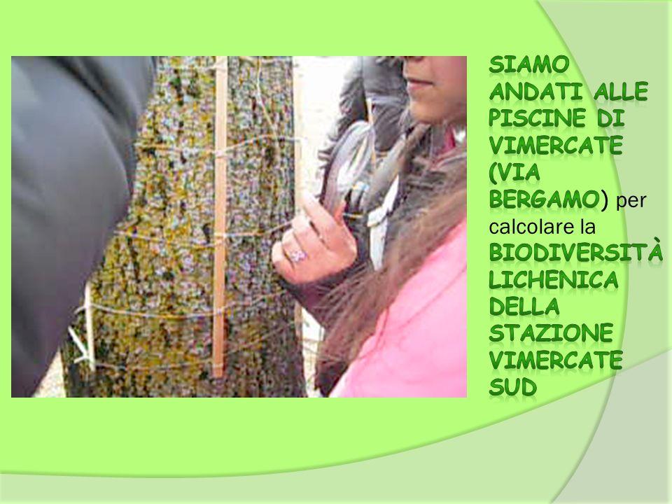 Siamo andati alle piscine di Vimercate (via Bergamo) per calcolare la Biodiversità lichenica della Stazione VIMERCATE SUD