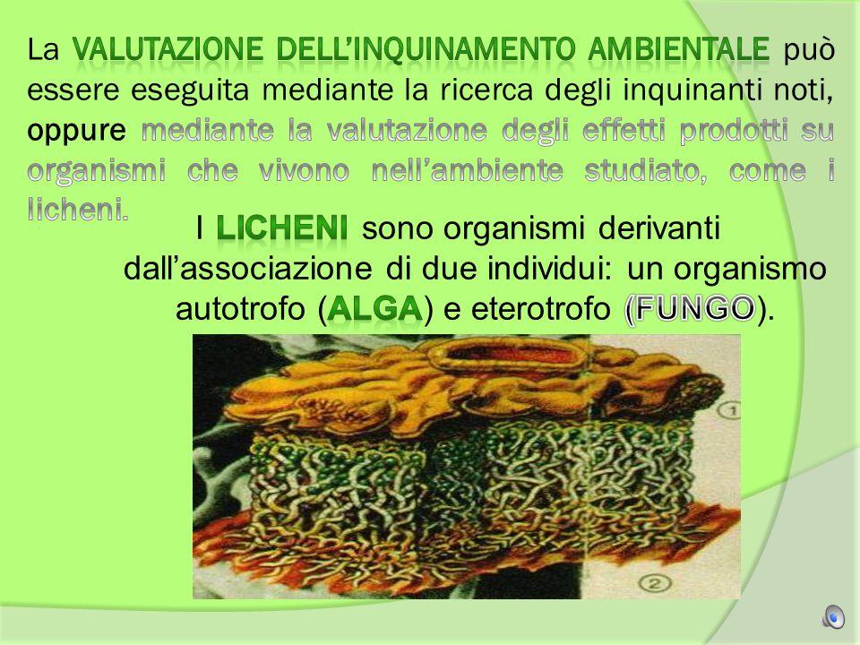 La valutazione dell'inquinamento ambientale può essere eseguita mediante la ricerca degli inquinanti noti, oppure mediante la valutazione degli effetti prodotti su organismi che vivono nell'ambiente studiato, come i licheni.