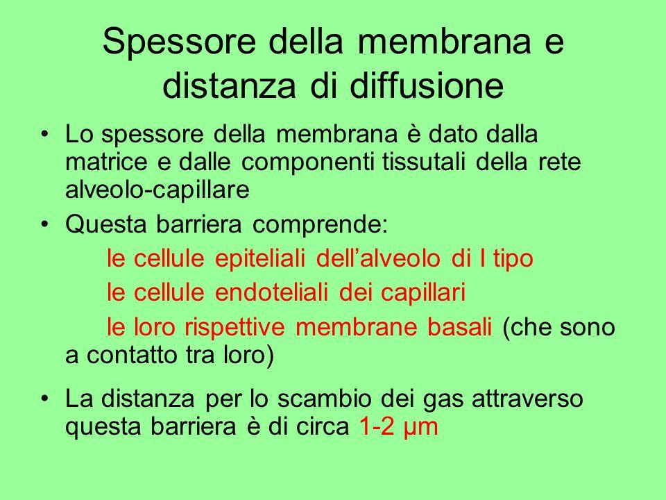 Spessore della membrana e distanza di diffusione
