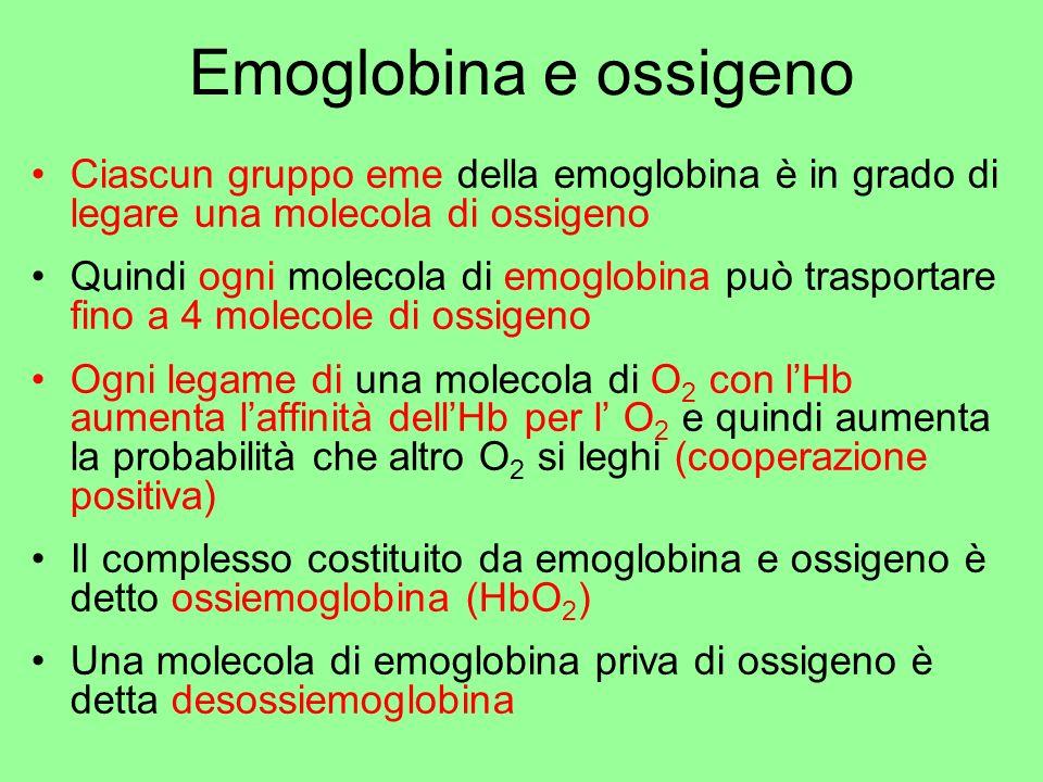 Emoglobina e ossigeno Ciascun gruppo eme della emoglobina è in grado di legare una molecola di ossigeno.