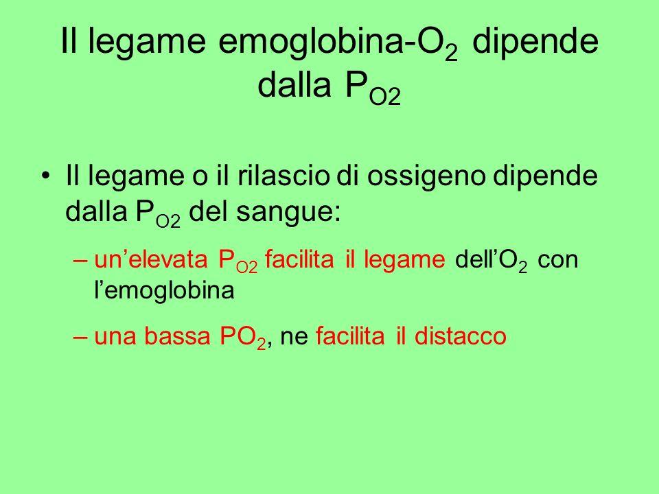 Il legame emoglobina-O2 dipende dalla PO2