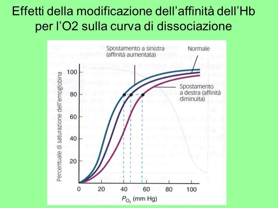 Effetti della modificazione dell'affinità dell'Hb per l'O2 sulla curva di dissociazione