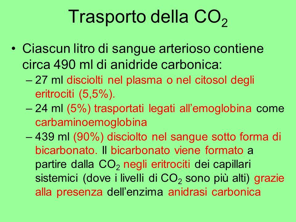 Trasporto della CO2 Ciascun litro di sangue arterioso contiene circa 490 ml di anidride carbonica:
