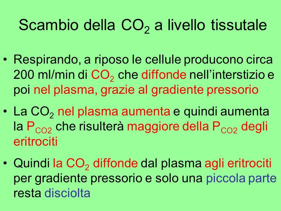 Scambio della CO2 a livello tissutale