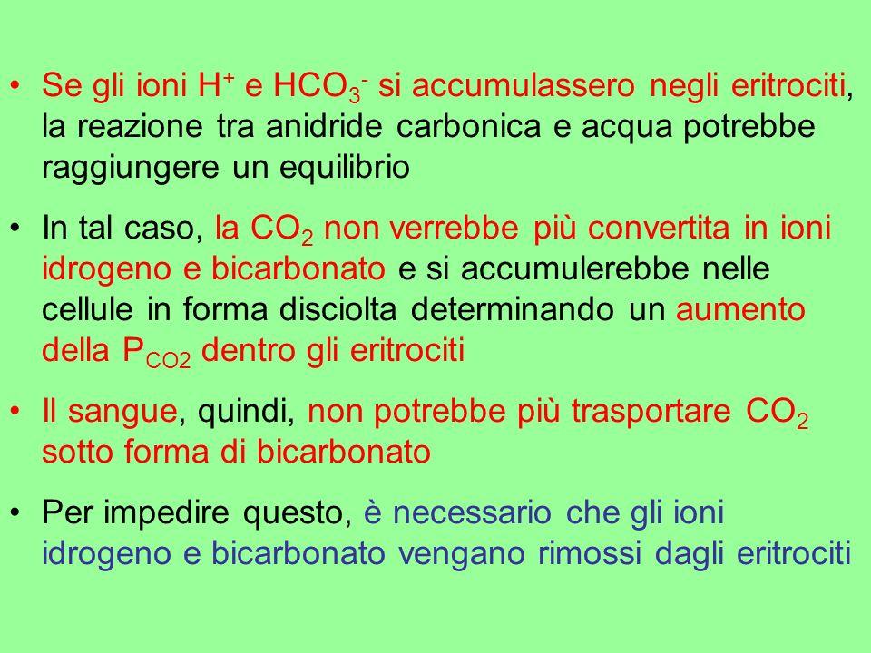 Se gli ioni H+ e HCO3- si accumulassero negli eritrociti, la reazione tra anidride carbonica e acqua potrebbe raggiungere un equilibrio