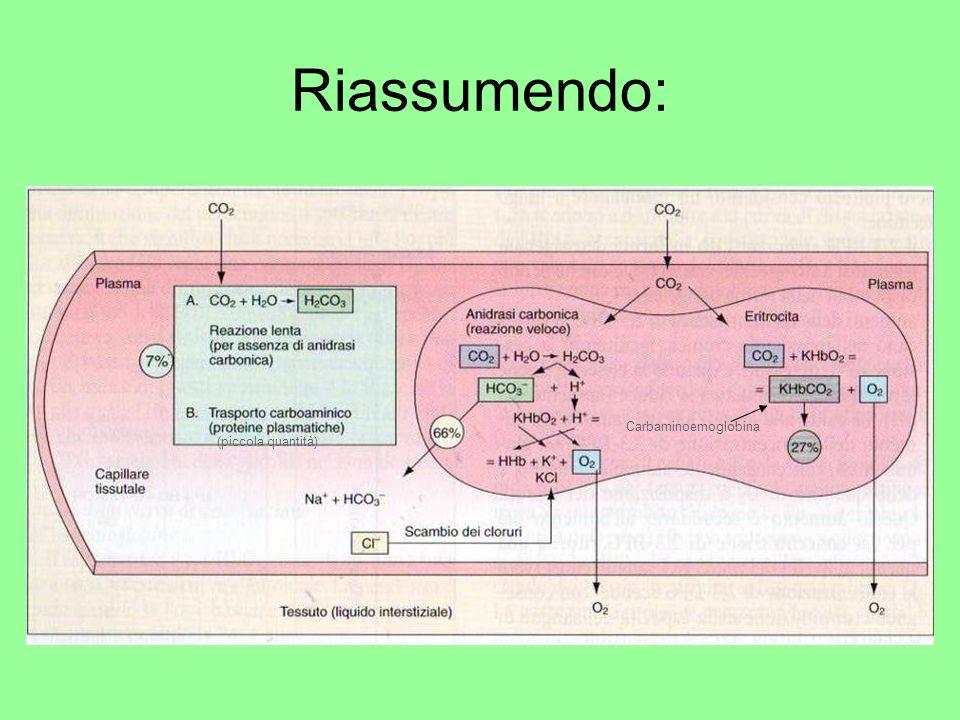 Riassumendo: Carbaminoemoglobina (piccola quantità)
