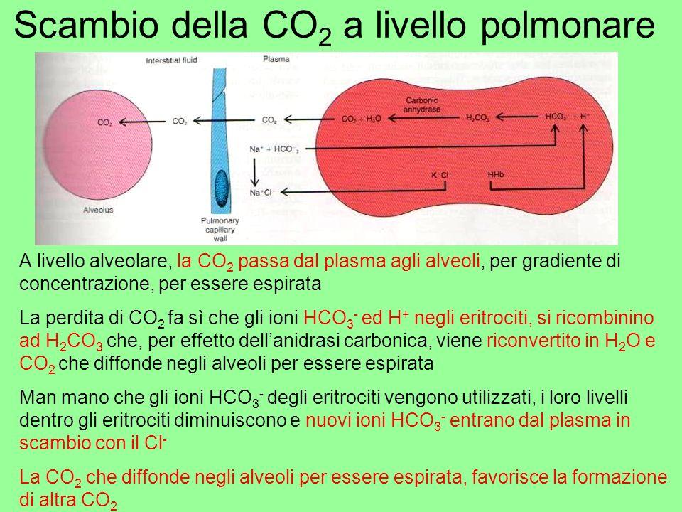 Scambio della CO2 a livello polmonare