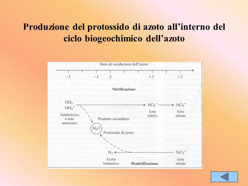 Produzione del protossido di azoto all'interno del ciclo biogeochimico dell'azoto
