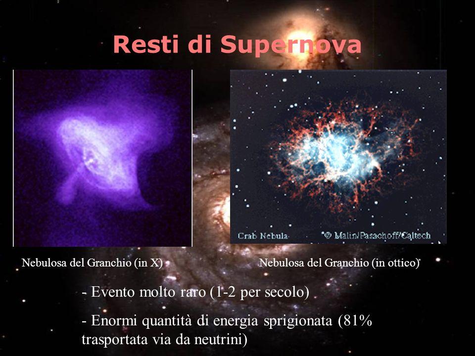 Resti di Supernova Evento molto raro (1-2 per secolo)