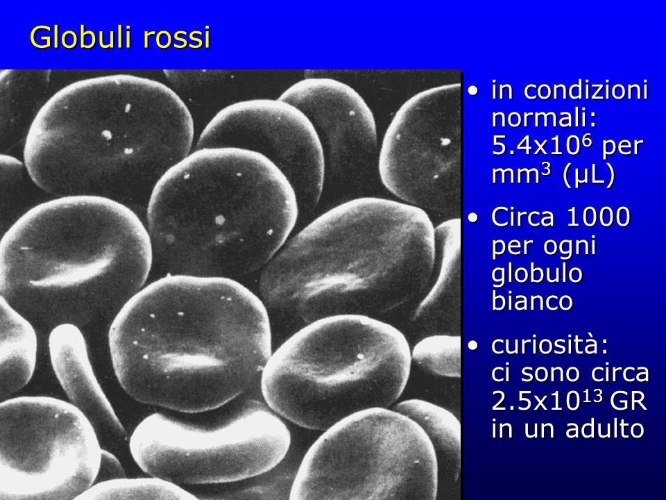 Globuli rossi in condizioni normali: 5.4x106 per mm3 (µL)