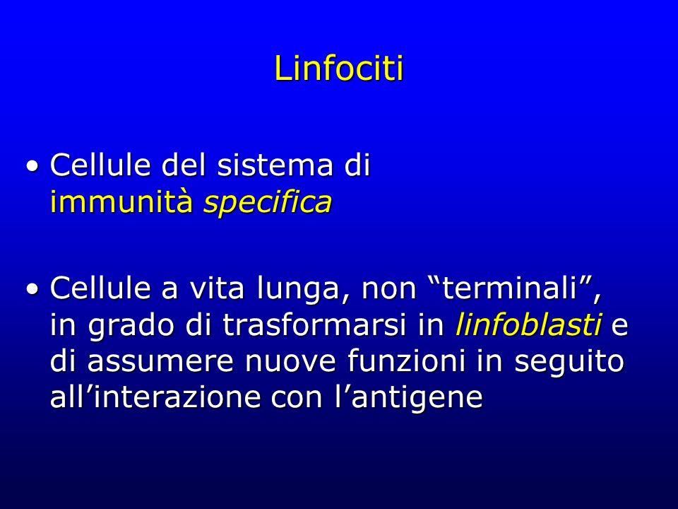 Linfociti Cellule del sistema di immunità specifica