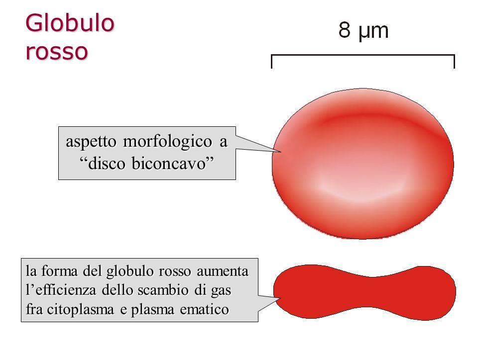 aspetto morfologico a disco biconcavo