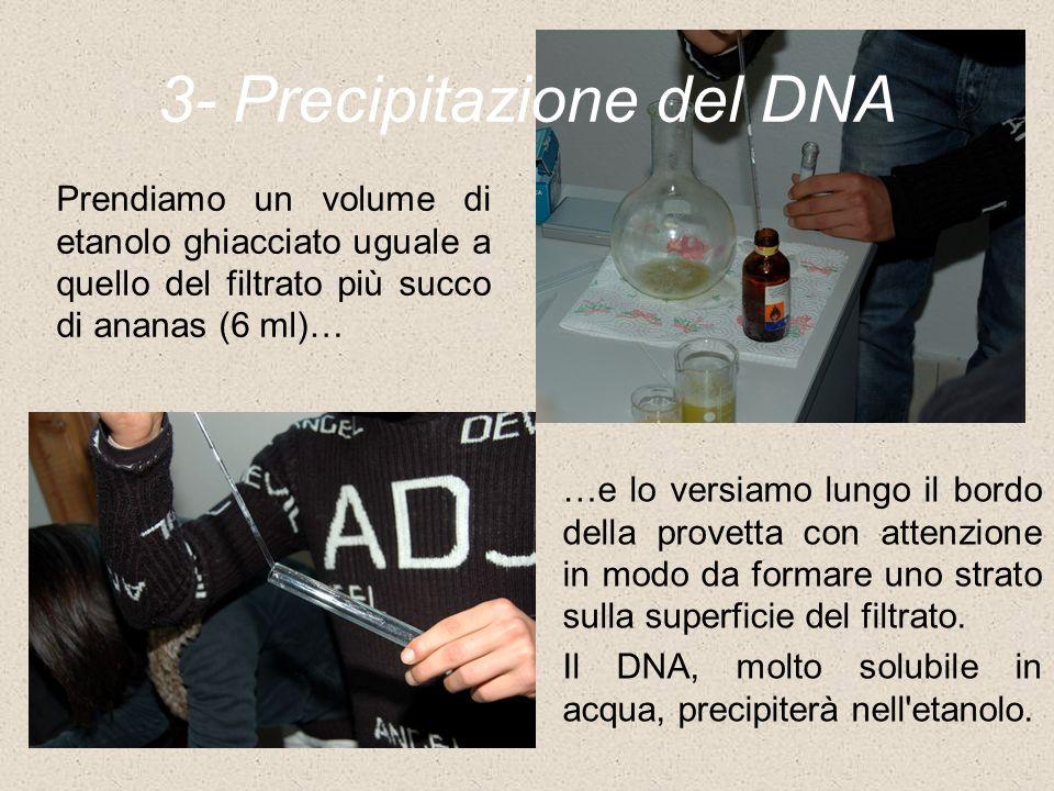 3- Precipitazione del DNA