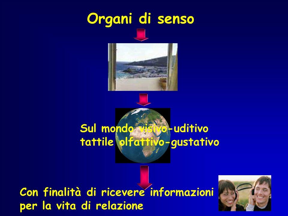 Organi di senso Sul mondo visivo-uditivo tattile olfattivo-gustativo