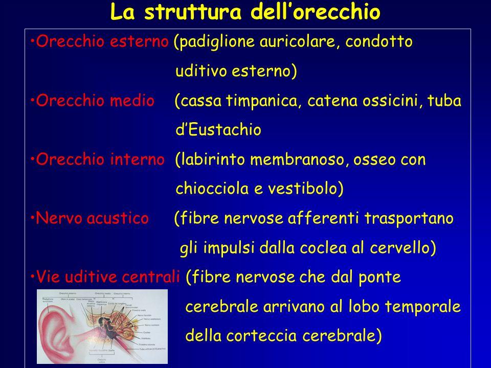 La struttura dell'orecchio
