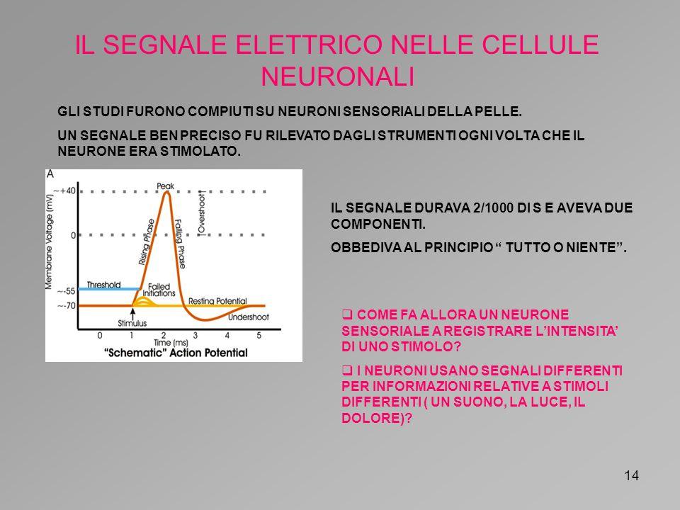 IL SEGNALE ELETTRICO NELLE CELLULE NEURONALI