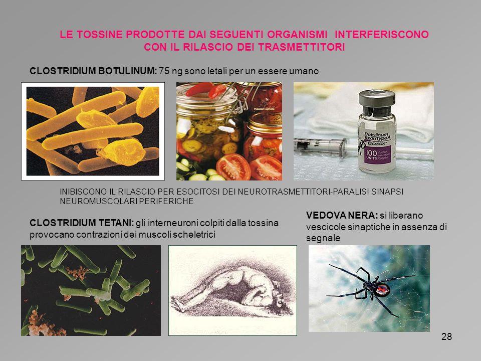 LE TOSSINE PRODOTTE DAI SEGUENTI ORGANISMI INTERFERISCONO CON IL RILASCIO DEI TRASMETTITORI