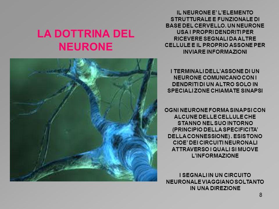 LA DOTTRINA DEL NEURONE