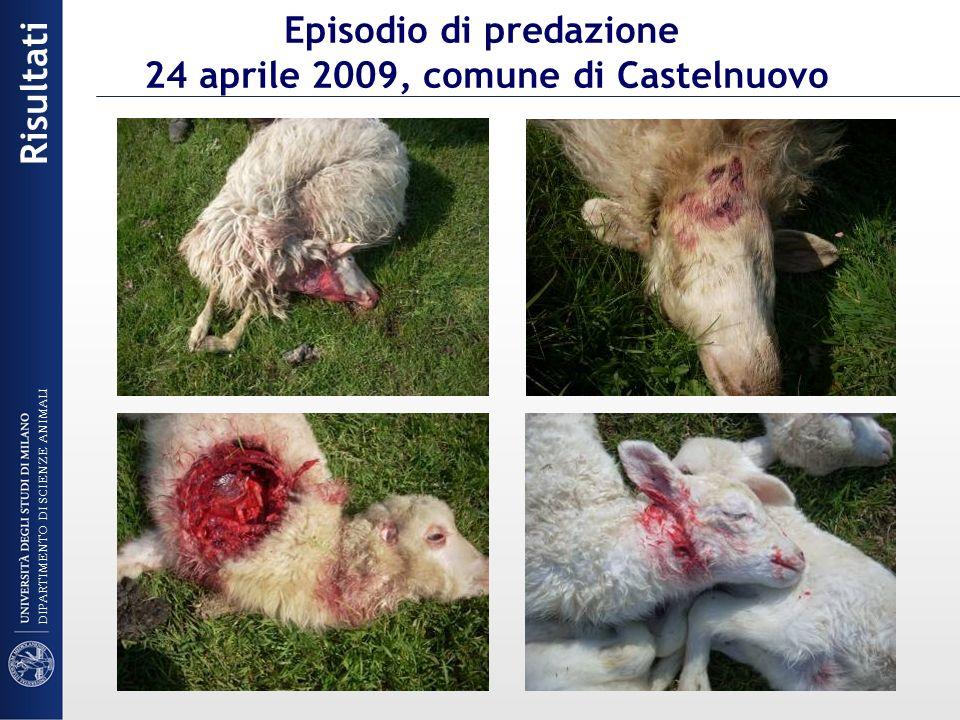 Episodio di predazione 24 aprile 2009, comune di Castelnuovo