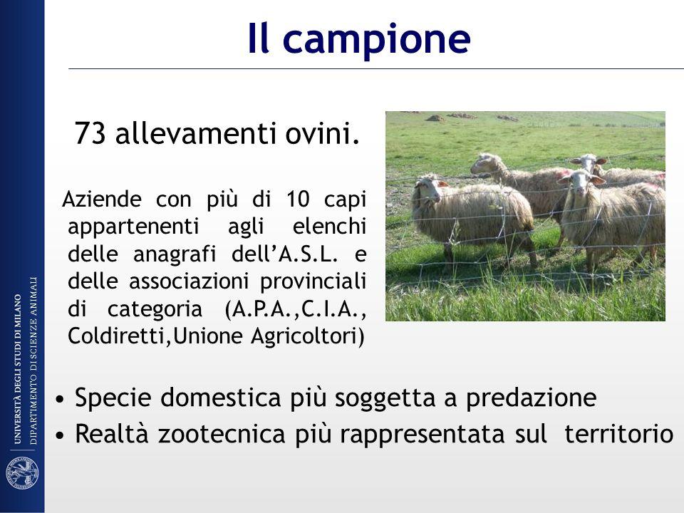Il campione 73 allevamenti ovini.