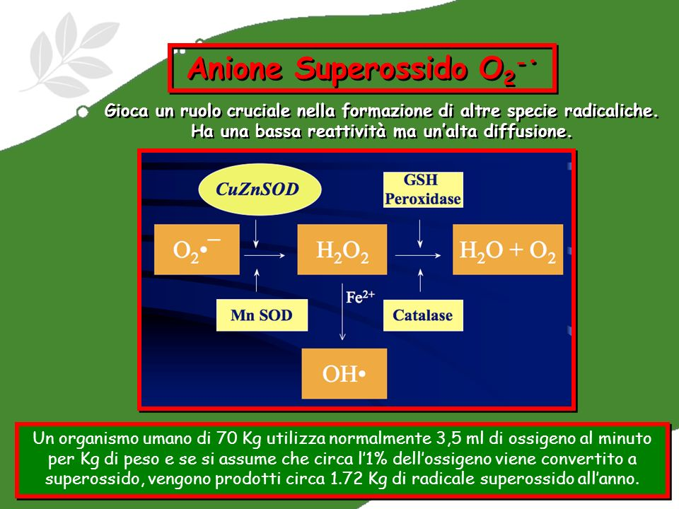 Anione Superossido O2-•